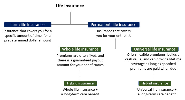 Hierarchical chart explaining different types of life insurance.